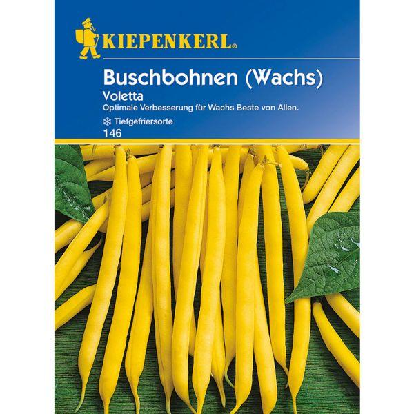 Buschbohne (Wachs) 'Voletta' Phaseolus vulgaris var. nanus Bild