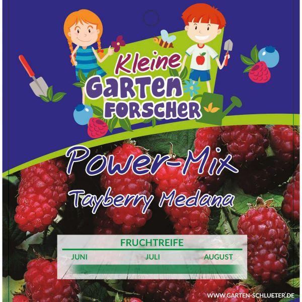 Tayberry Medana 'Power-Mix-Beere' - Kleine Gartenforscher Rubus 'Tayberry Medana' Bild
