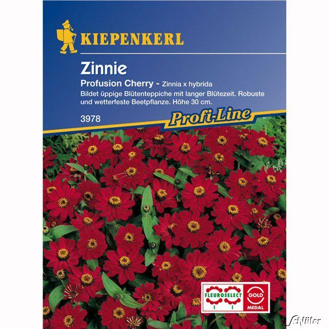 Garten-Schlueter.de: Zinnie Profusion Cherry