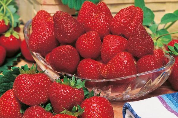 Erdbeeren_Standort