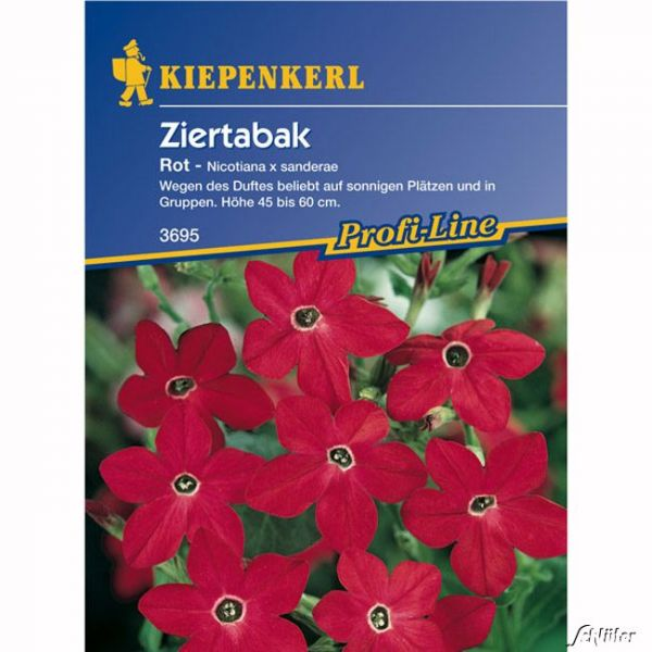 Ziertabak 'Rot' Nicotiana x sanderae Bild