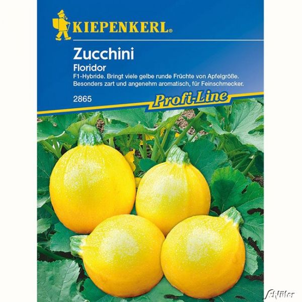 Zucchini 'Floridor' Cucurbita pepo Bild