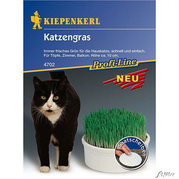 Katzengras - Saatscheiben Katzengras Bild