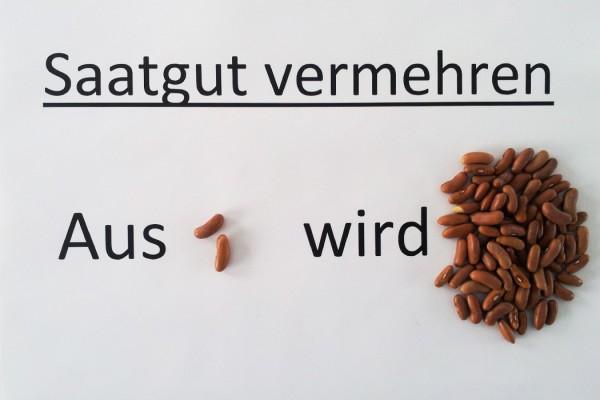 Saatgut_Vermehren