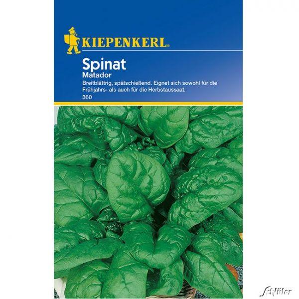 Spinat 'Matador' Spinacia oleracea Bild