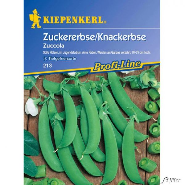 Zuckererbse 'Zuccola' Pisum sativum 'Zuccola' Bild