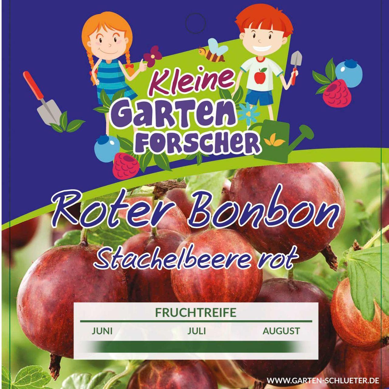 Rote Stachelbeere 'Roter Bonbon' - Kleine Gartenforscher