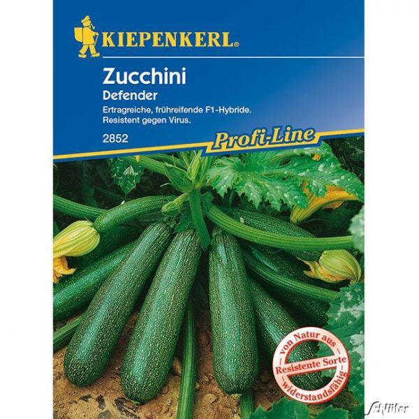 Zucchini 'Defender' Cucurbita pepo Bild