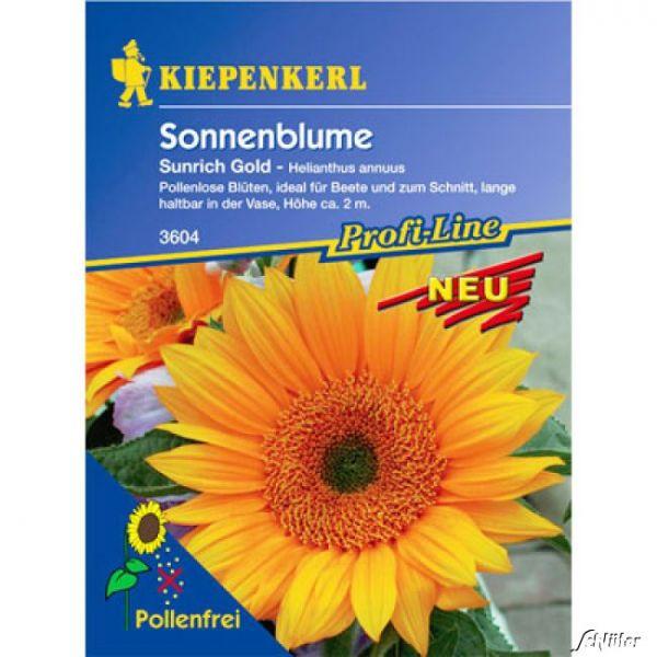 Sonnenblume 'Sunrich Gold' Helianthus annuus Bild