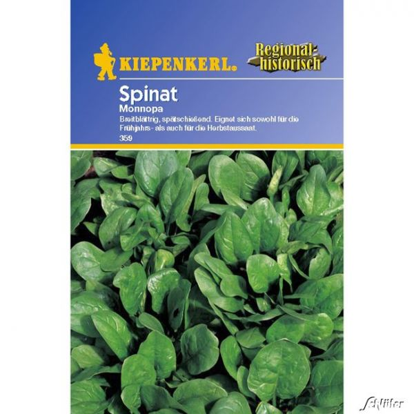 Spinat 'Monnopa' Spinacia oleracea Bild