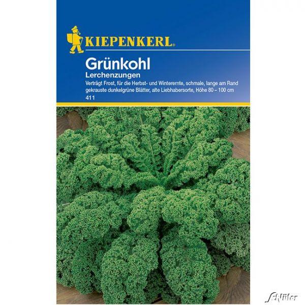 Grünkohl 'Lerchenzungen' Brassica oleracea var. sabellica Bild