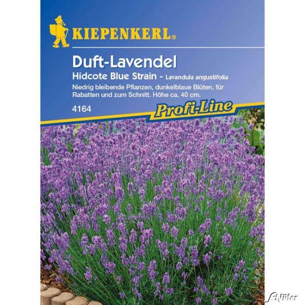Duft-Lavendel 'Hidcote Blue Strain' Lavendula angustifolia Bild