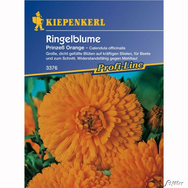Ringelblumen 'Prinzeß Orange' Calendula officinalis Bild