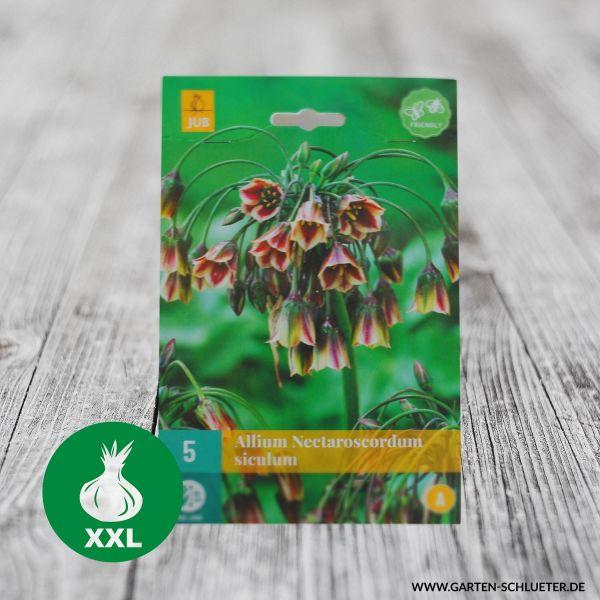 Blumenzwiebeln, Zwiebelgröße 8/+, 30 Stück