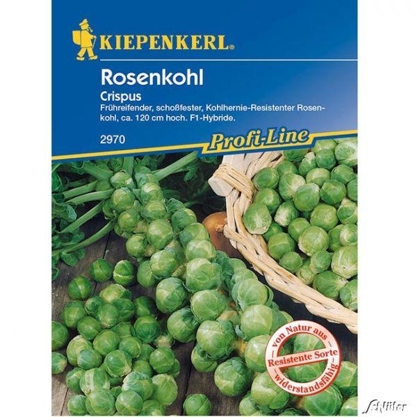 Rosenkohl 'Crispus' Brassica oleracea var. gemmifera Bild