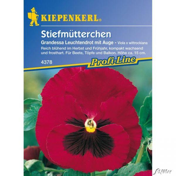 Stiefmütterchen 'Grandessa - Leuchtendrot mit Auge' Viola x wittrockiana 'Grandessa - Leuchtendrot mit Auge' Bild