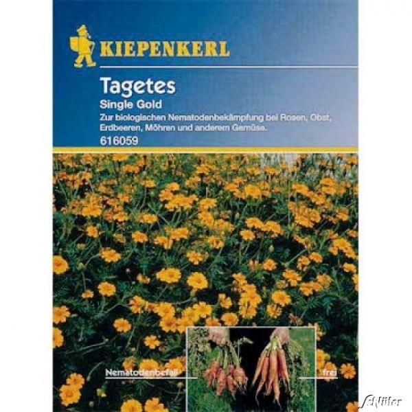 Nematoden-Killer - Tagetes 'Single Gold' Tagetes x patula Bild