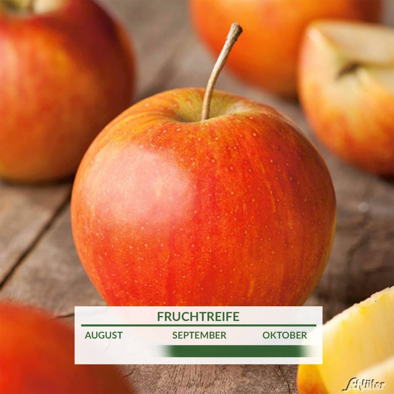 Garten-Schlueter.de: Apfel Rubinette - Rafzubin Herbstapfel