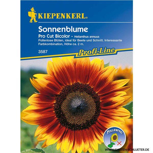 Sonnenblume 'Pro Cut Bicolor' Helianthus annuus Bild