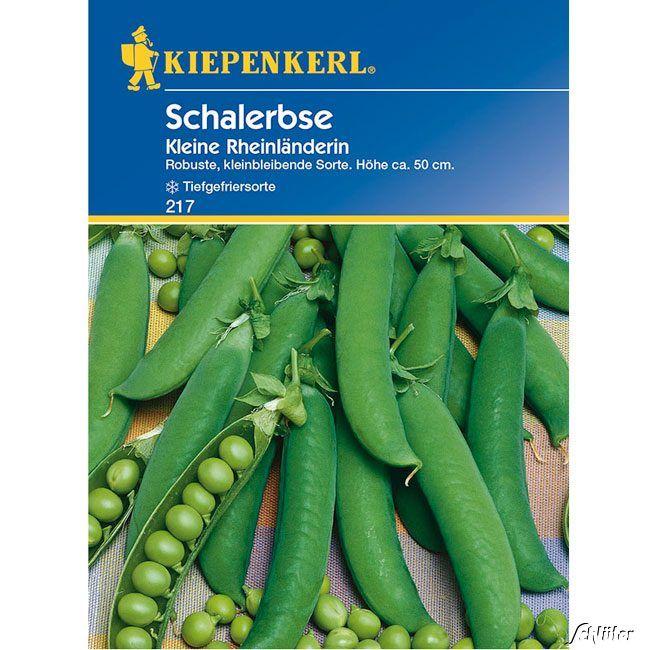 Schalerbse 'Kleine Rheinländerin'