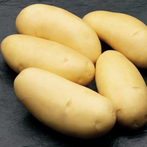 Kartoffel_Annabelle_2-300x300