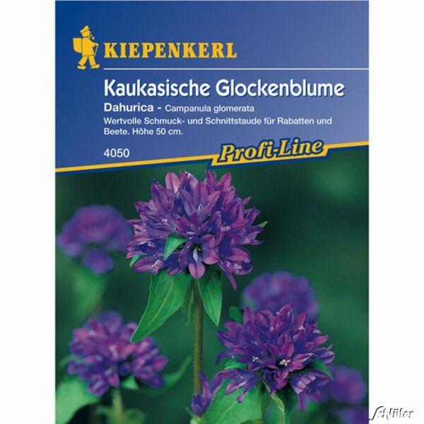 Glockenblume (Kaukasische Glockenblume) 'Dahurica' Campanula glomerata Bild
