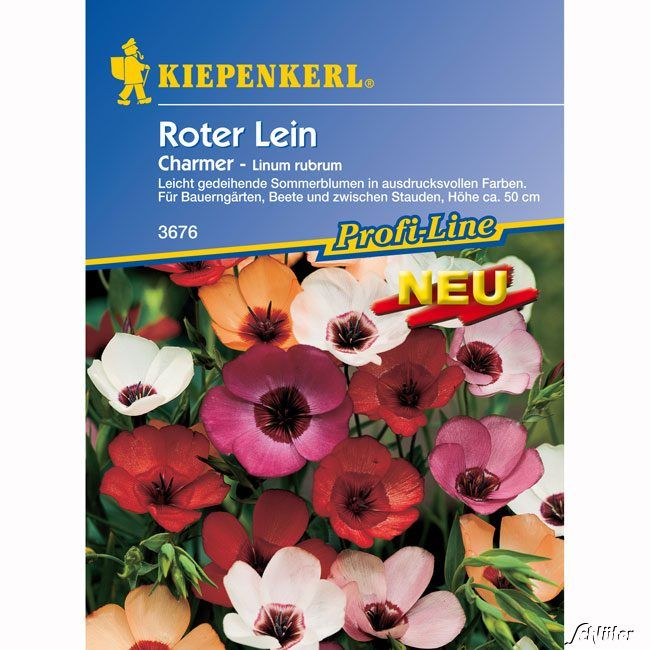 Roter Lein 'Charmer'