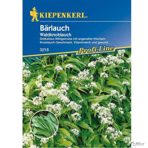 Bärlauch / Waldknoblauch Allium ursinium Bild
