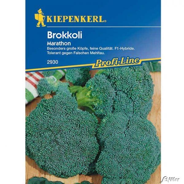 Brokkoli 'Marathon' Brassica oleracea var. italica Bild