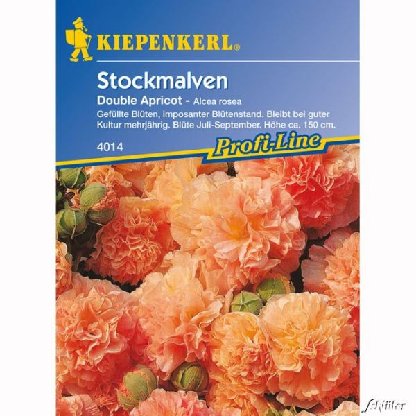 Stockrosen 'Chaters Double Apricot' Alcea rosea Bild