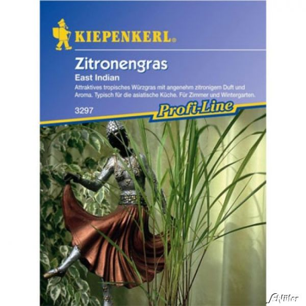 Zitronengras East Indian Cymbopogon flexuosus Bild