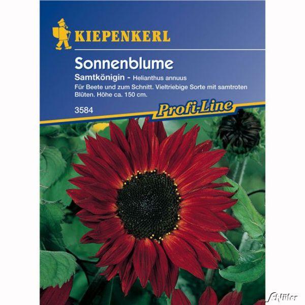 Sonnenblume 'Samtkönigin' Helianthus annuus Bild