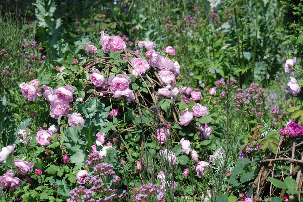 Rosen Kombinieren Gartentraume