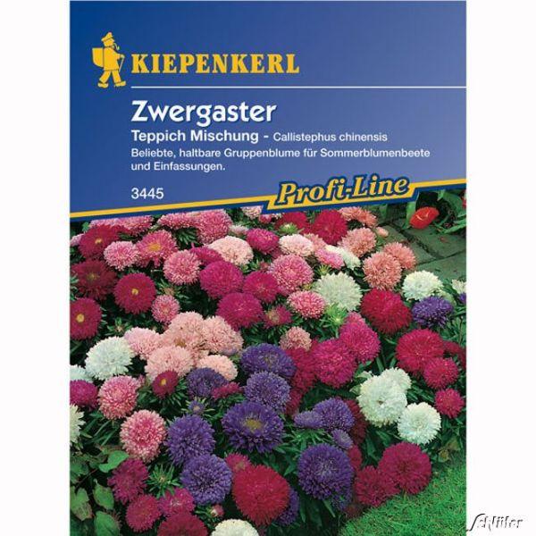 Zwergaster 'Teppich' Callistephus chinensis Bild