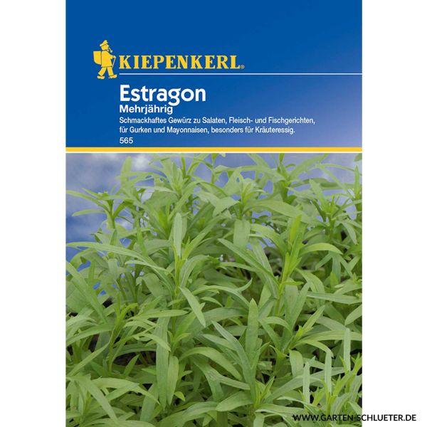 Estragon Artemisia dracunculus Bild