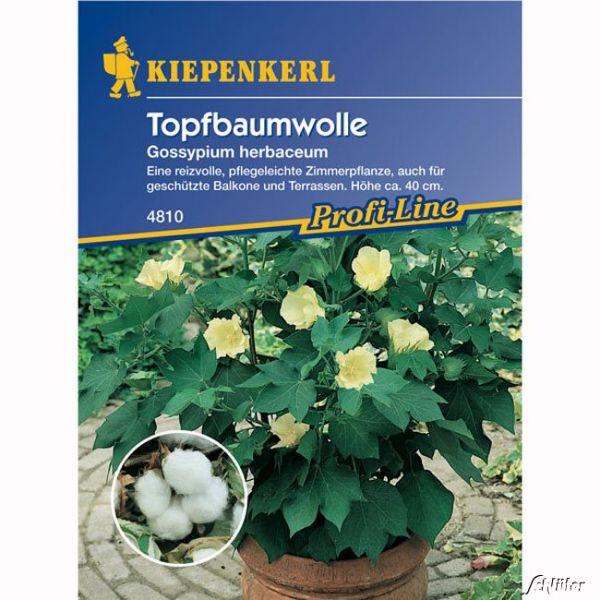 Baumwolle (Topf-) Gossypium herbaceum Bild