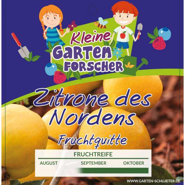 Fruchtquitte 'Zitrone des Nordens' - Kleine Gartenforscher Chaenomelis japonica Bild