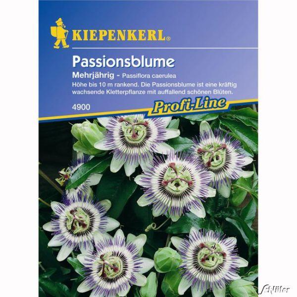 Passionsblume Passiflora caerulea Bild
