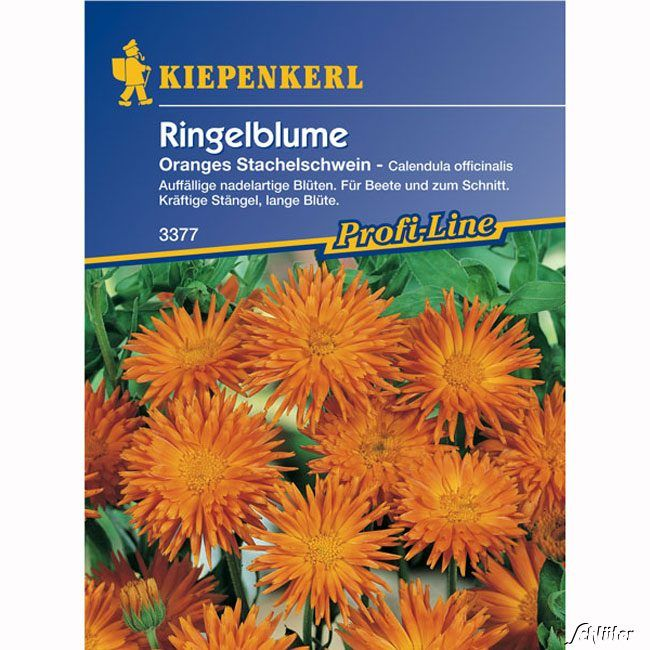 Ringelblumen 'Oranges Stachelschwein'