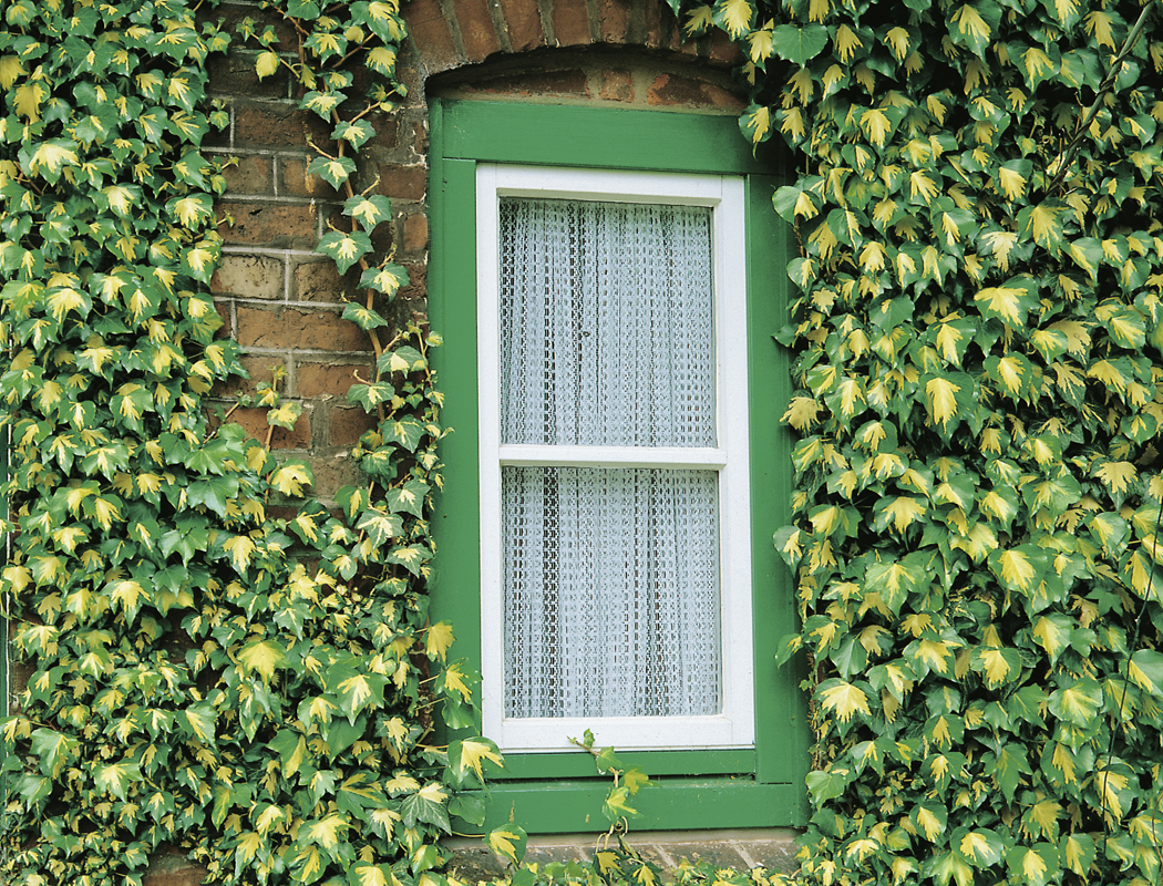 Bekannt Fassadenbegrünung – für eine lebendige Umwelt | Kletterpflanzen VW67
