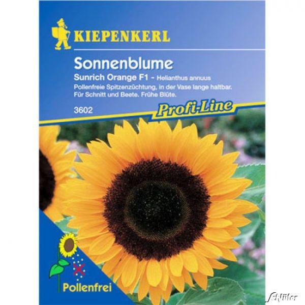 Sonnenblume 'Sunrich Orange' Helianthus annuus Bild