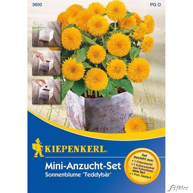 Sonnenblume 'Teddybär' - Mini-Anzucht-Set