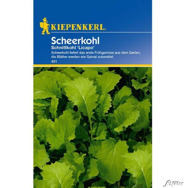 Schnittkohl 'Licapo' Brassica napus Bild
