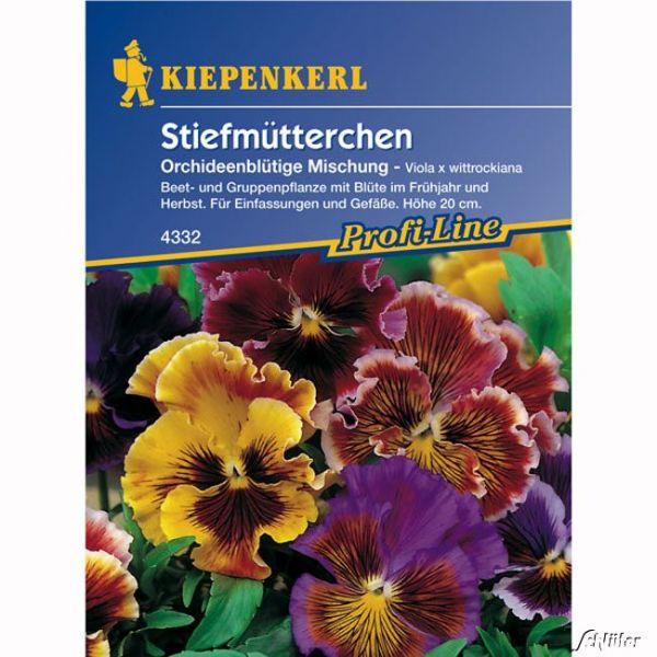 Stiefmütterchen 'Orchideenblütige Mischung' Viola x wittrockiana Bild