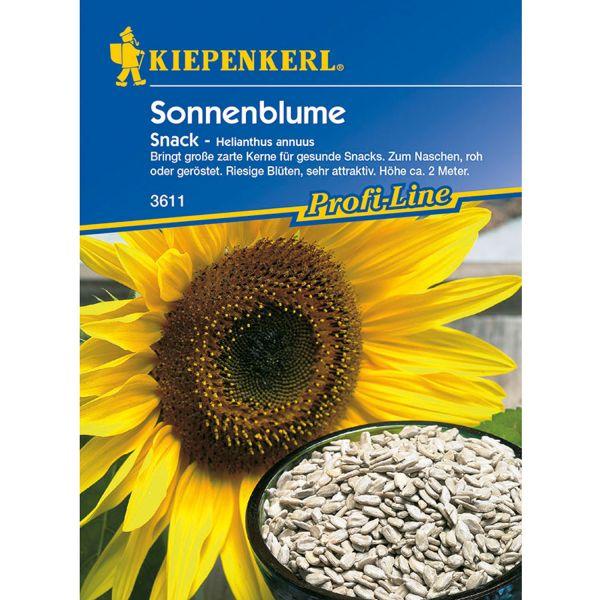 Sonnenblume 'Snack' Helianthus annuus Bild