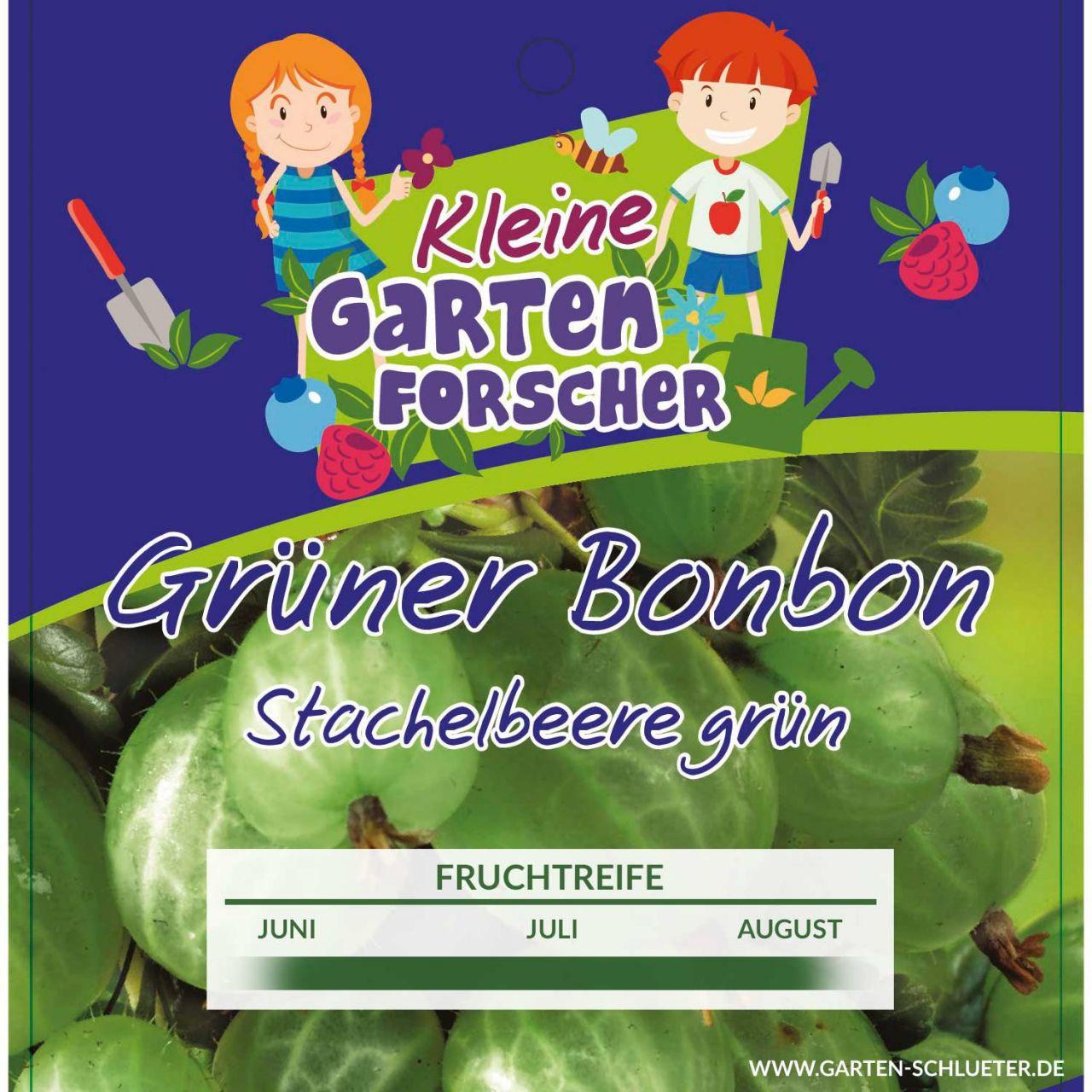 Grüne Stachelbeere 'Grüner Bonbon' Kleine Gartenforscher