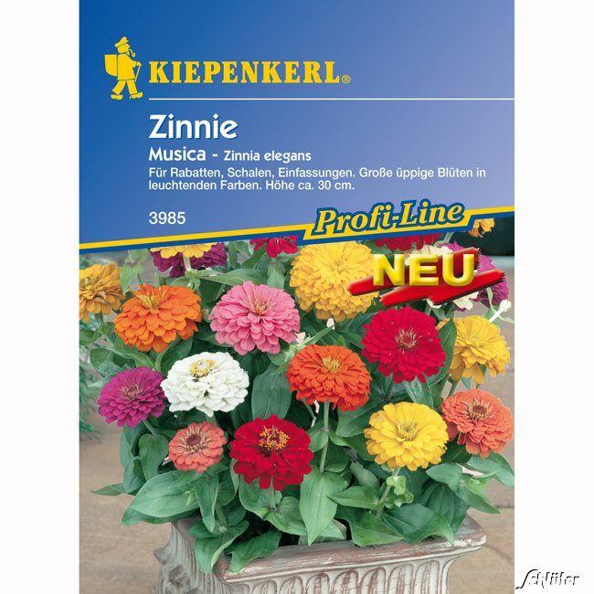 Garten-Schlueter.de: Zinnie Musica Mischung
