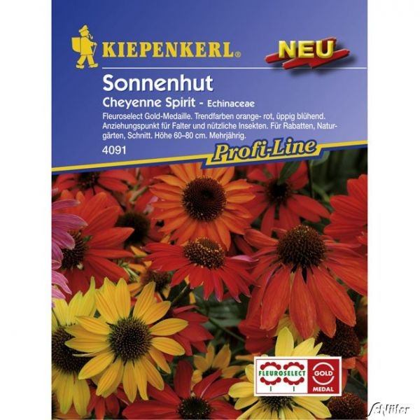 Sonnenhut 'Cheyenne Spirit' Echinacea purpurea Bild