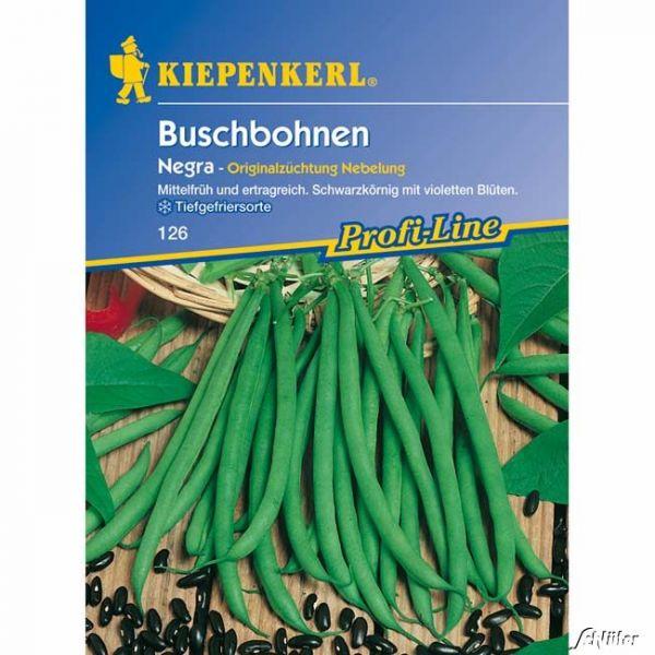 Feinschmeckerbohne 'Negra' Phaseolus vulgaris var. nanus Bild