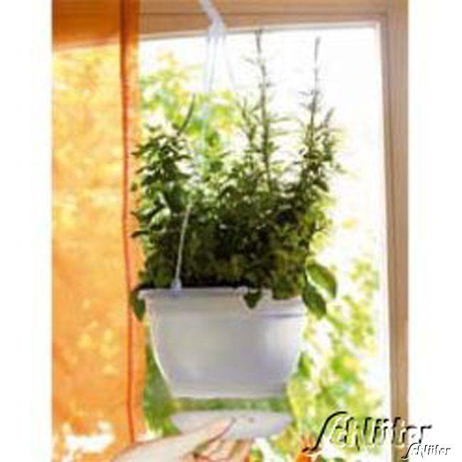 Blumenampel für Zimmer und Garten